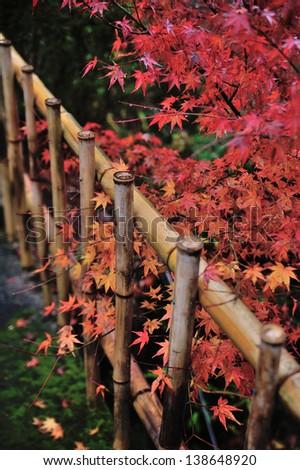 Japanese garden #138648920