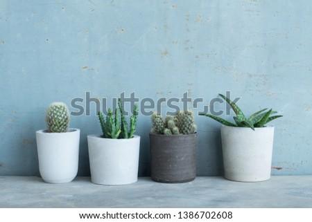 Set of cactus in handmade concrete pot #1386702608