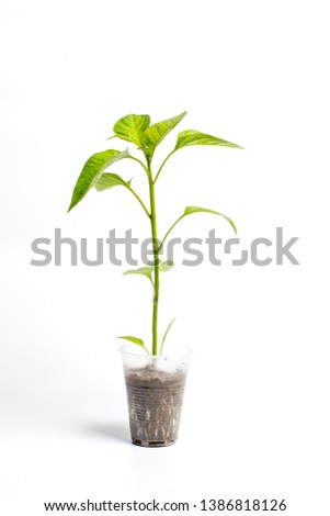 Green young plant in a plastic cup #1386818126