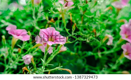 Various flowers that bloom in the summer #1387329473