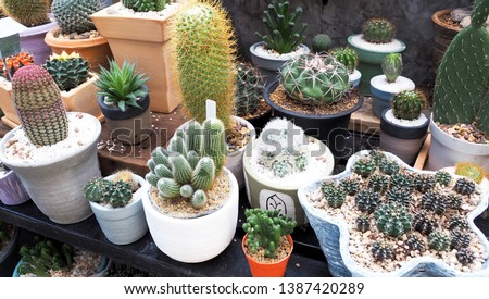 Decorate home with various of succulent cactus collection house plant in pot on table #1387420289