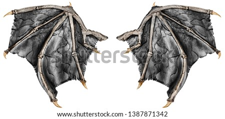 Dark grey realistic dragon wings, isolated on white background. Close up.