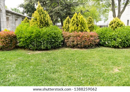 Image with green nature landscape #1388259062