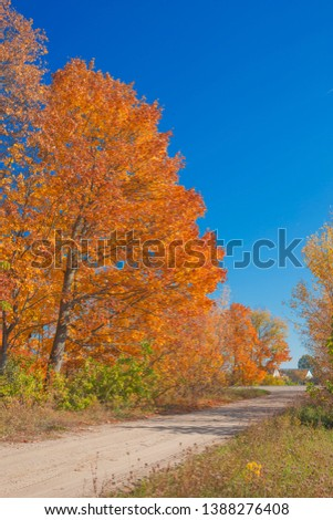 Golden autumn in the park. Nature in the vicinity of Pruzhany, Brest region, Belarus.  #1388276408