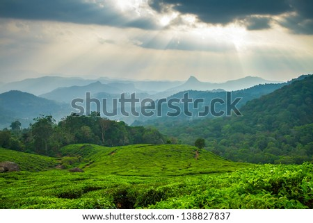 Beautiful fresh green tea plantation in Munnar, Kerala, India #138827837