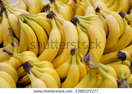 Clusters of yellow ripe bananas in a store laid out in rows in close-up #1388329277