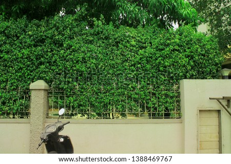 Natural Green leaves wall background #1388469767