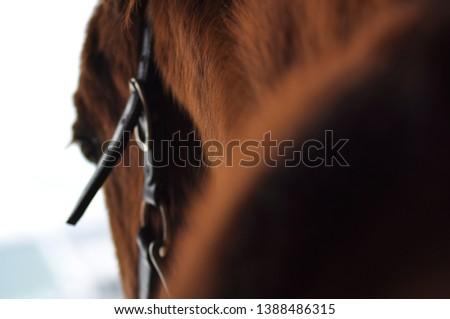 Horse Soft Focus Halter Head #1388486315