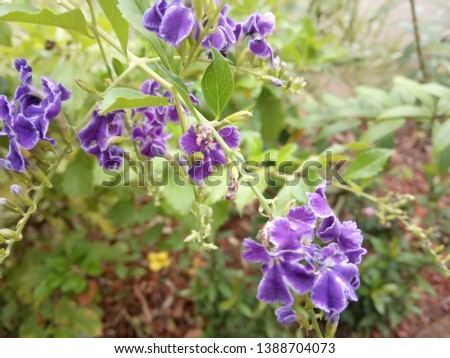 beautiful violet flowers from the garden #1388704073