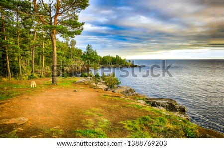 Forest lake shore in rainy day. Cat walk in lake forest. Forest lake trees view. Forest lake shore panorama #1388769203
