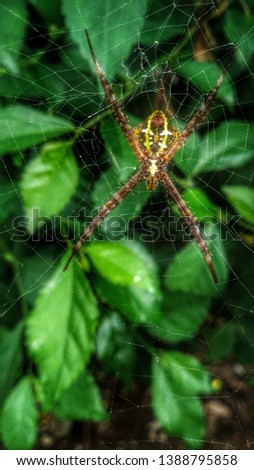 meeting spiders in the garden is looking after the nest #1388795858