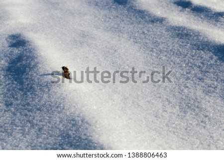 sticking out of the snow dry branch of grass in the winter season on the background of snow and snowdrifts #1388806463
