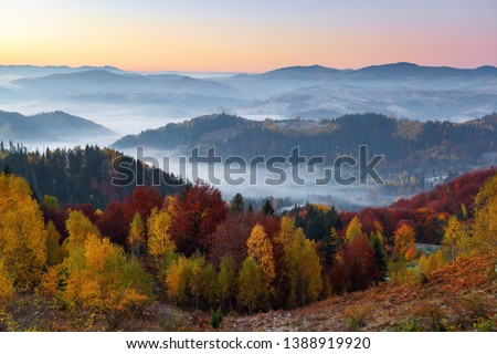 Majestic autumn rural scenery. Landscape with beautiful mountains, fields and forests covered with morning fog. There are trees on the lawn full of orange leaves. Picturesque resort Carpathian, Europa #1388919920