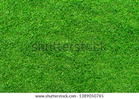 Green lawn on background and texture.  #1389050765
