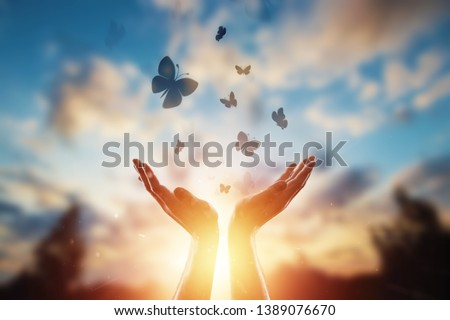 Hands close up on the background of a beautiful sunset, a flock of butterflies flies, enjoying nature. The concept of hope, faith, religion, a symbol of hope and freedom.
