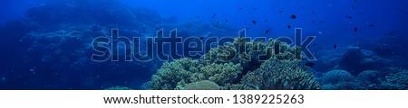 coral reef underwater / sea coral lagoon, ocean ecosystem #1389225263