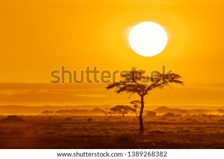 The sun rises over the acacia trees of Amboseli National Park, Kenya. Golden morning light with space for text. #1389268382