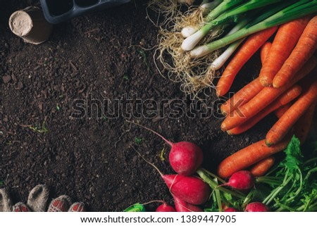 Organic homegrown produce and gardening equipment with copy space, top view of greenhouse peat soil #1389447905