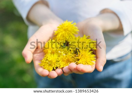 Yellow spring flowers dandelions in the hands of girl, close-up top view. #1389653426