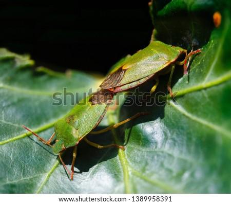 Green beetles pair on leaf #1389958391