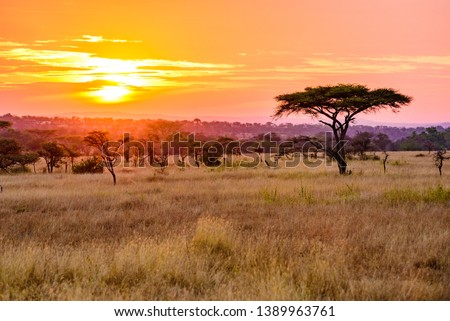 Sunset in savannah of Africa with acacia trees, Safari in Serengeti of Tanzania #1389963761