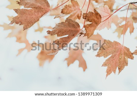 Colourful of leaves on tree in autumn have variety of colour such as red, yellow and orange. Sunny day and showing the sky in the background. #1389971309