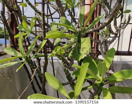 leaf green flower nature wildlife wild organic plant tree forest #1390157156