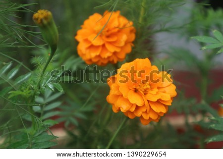 Plants that are often used to beautify the yard #1390229654