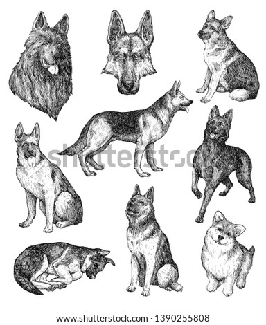 Set of hand drawn ink dogs sketches. Shepherd, sheepdog, guard dog. Vintage ink animals illustration. Isolated on white