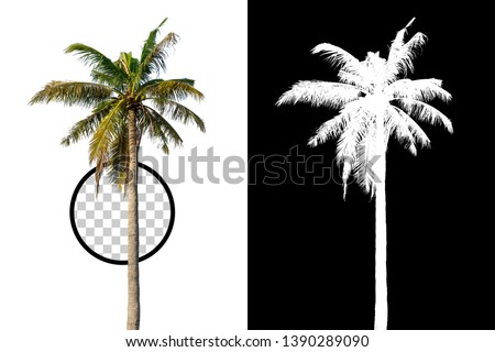 Coconut Tree on transparent background with clipping path and alpha channel on black background. Can use in architectural design, Decoration work, Used with natural articles both on print and website. #1390289090