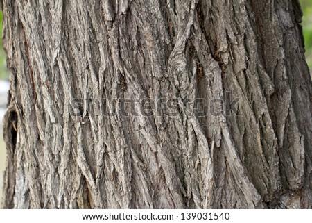 tree bark as background #139031540