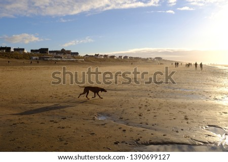 Dog playing on sunny Amsterdam beach Zandvoort on a clear winter day #1390699127