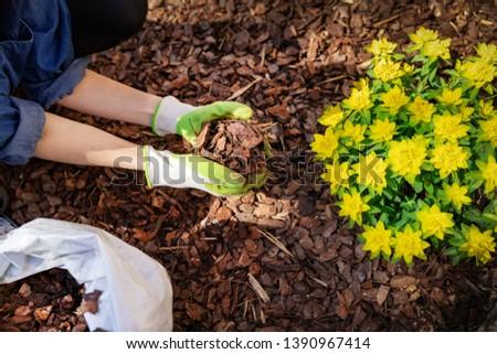 gardener mulching flower bed with pine tree bark mulch #1390967414