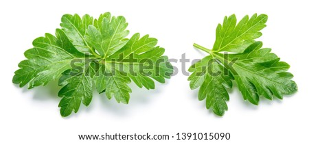 Parsley. Parsley isolated. Top view. Full depth of field. #1391015090