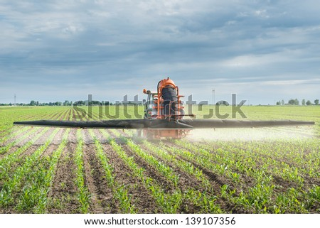 Tractor spraying corn in the spring #139107356