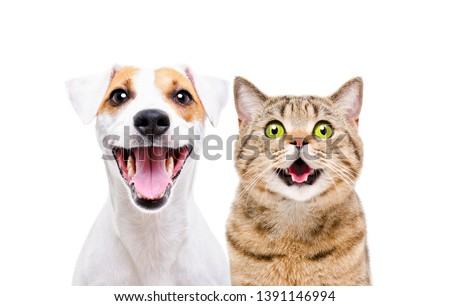 Portrait of cute dog Jack Russell Terrier and cheerful cat Scottish Straight isolated on white background #1391146994