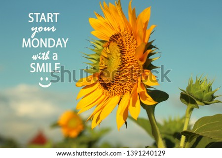 Inspirational Motivational quote- Start your Monday with a smile. With beautiful sunflowers and  morning light in the field, white clouds and blue sky background. Smile icon emoticon. Monday Quote. #1391240129