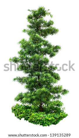 Tree isolated on white background #139135289