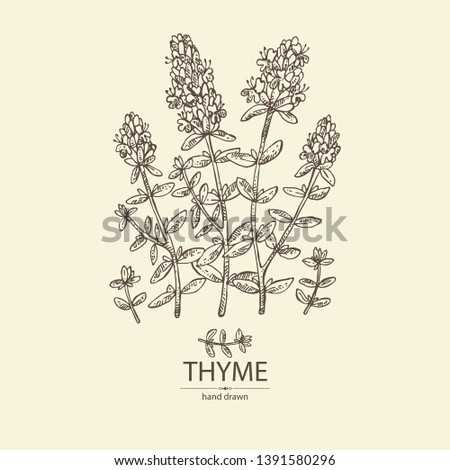 Background with of thyme: leaves and flowers of thyme. Vector hand drawn illustration. #1391580296