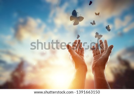 Hands close up on the background of a beautiful sunset, a flock of butterflies flies, enjoying nature. The concept of hope, faith, religion, a symbol of hope and freedom. #1391663150