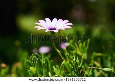 Beautiful spring daisies in the nature #1391803712