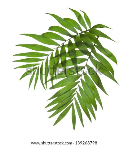 Two leaves of a palm tree isolated on white #139268798