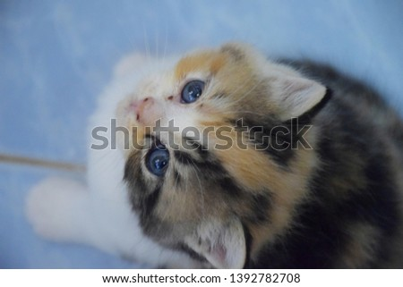 Three cute kittens with cute gray eyes looking up at the camera. #1392782708