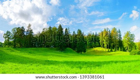 Forest spring landscape - dense forest trees in the valley in sunny weather, panoramic scene of spring nature #1393381061