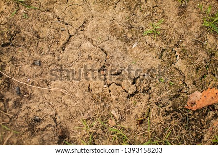 Top view shot of cracked soil. dry soil in cracks in the spring. young grass grows out of dry ground. #1393458203