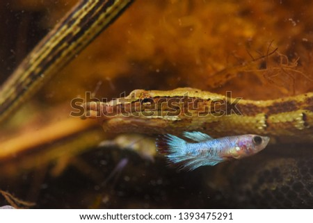 Tentacled water snake in water #1393475291