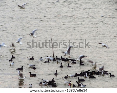 seagull and other birds flying on the river #1393768634