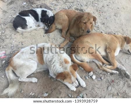 Dangerous Dogs - Group.Kathmandu Nepal,May 08/2019.