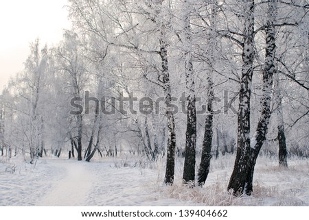 trees under the snow #139404662
