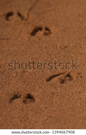 Footprints of the antelope in sand. Picture from the safari in Africa.